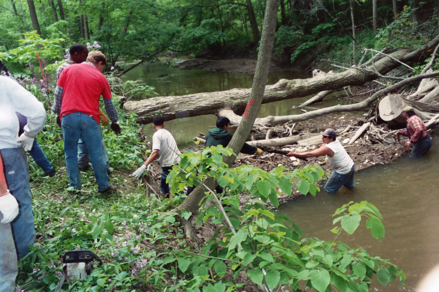 Volunteers work to clean up Rouge River