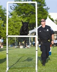 Police dog in training jumping through an obstacle with officer nearby