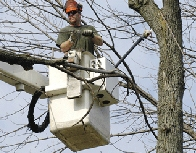 Man in a bucket being lifted into a tree to trim it